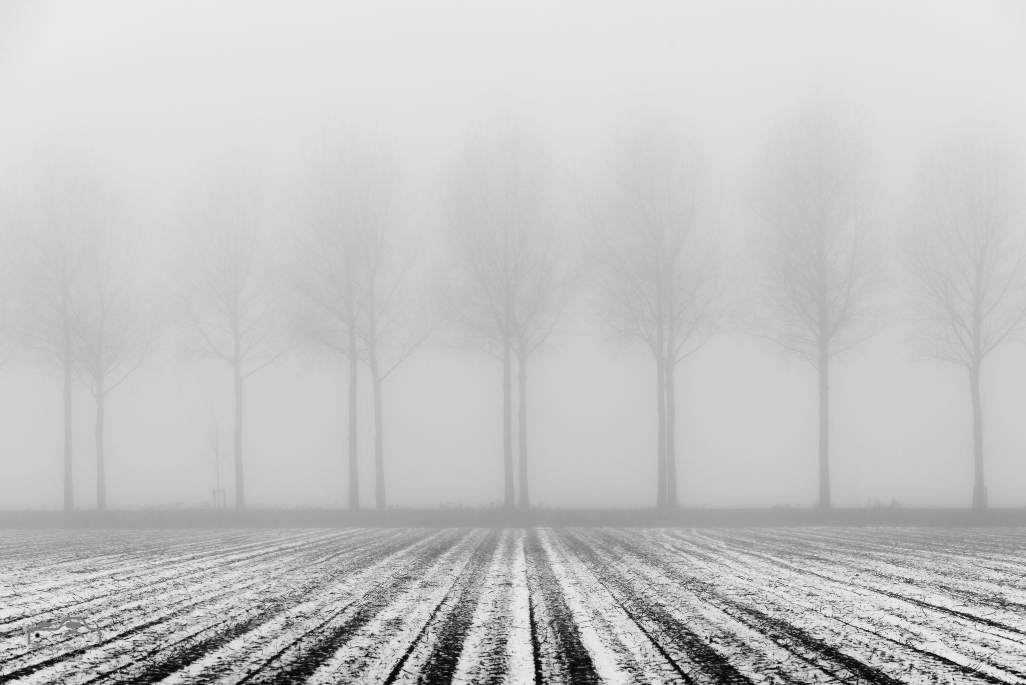 Noordoostpolder in mist en sneeuw