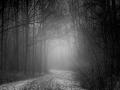 Urkerbos in mist en sneeuw