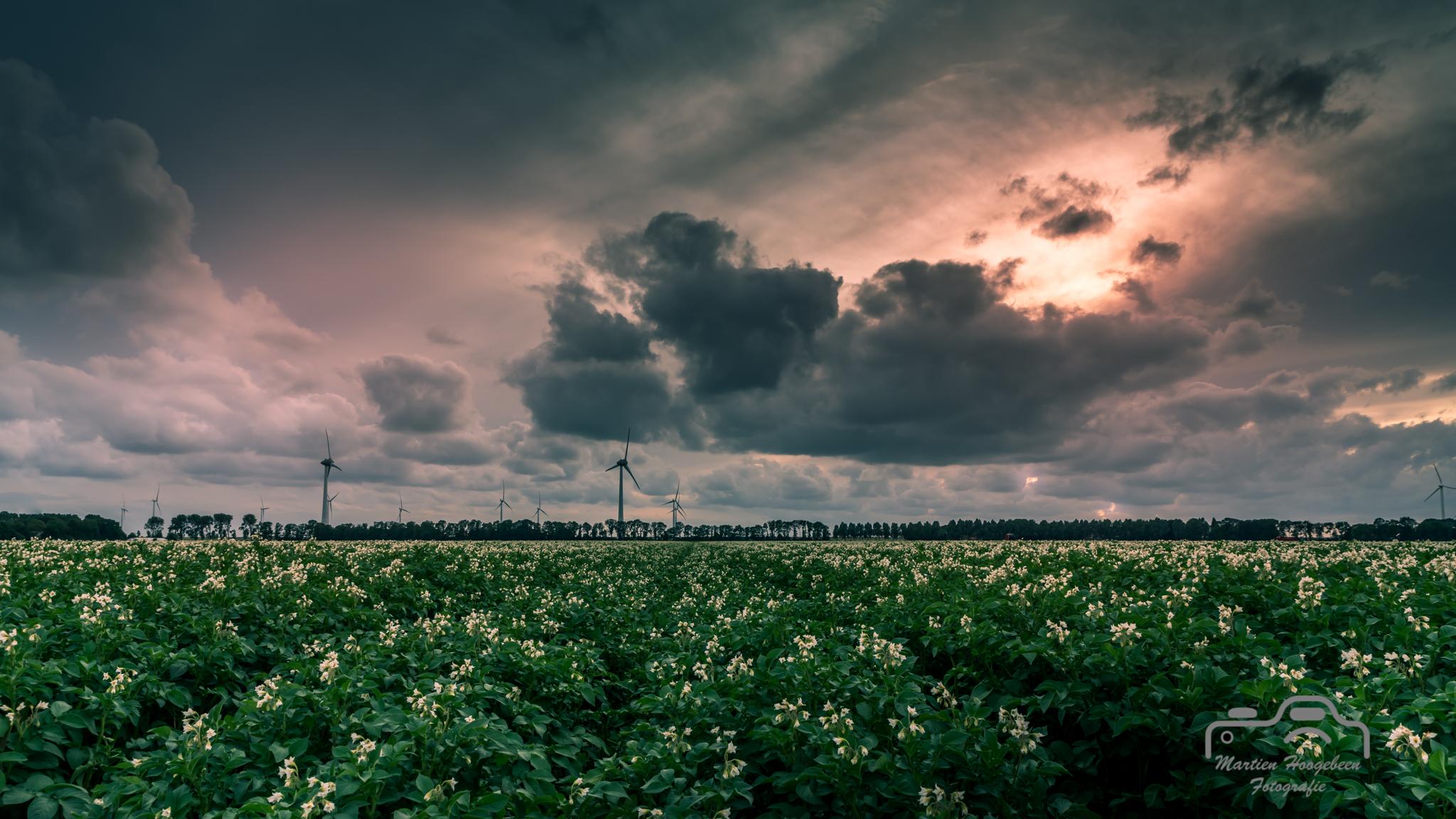 Sunset Noordoostpolder